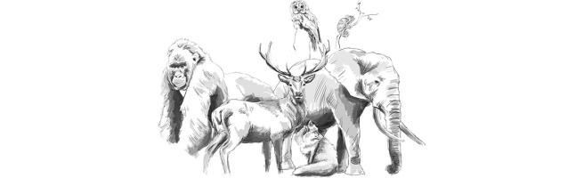 Animales para blog